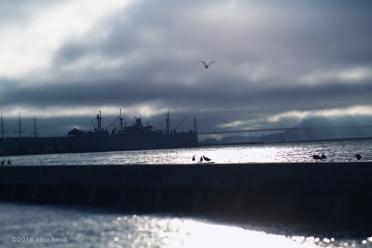 Pier 39 tilt-shift © Nico Henderson