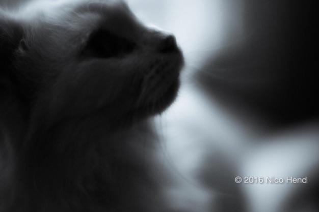 Bianca soft focus © Nico Hend